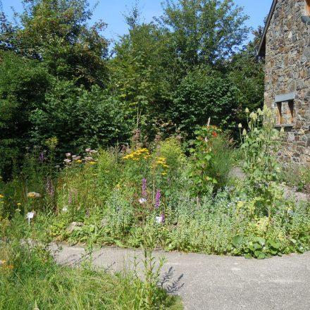 Kräutergarten2