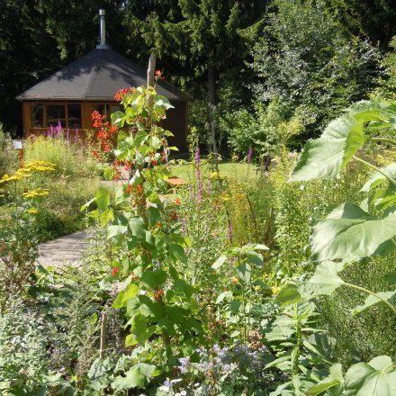 Kräutergarten4