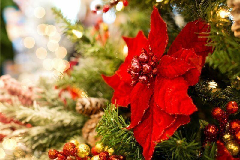 Weihnachtspflanze Pixabay
